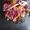 Съедобные букеты Тюмень,  фруктовые букеты,  сладкие букеты #1657221