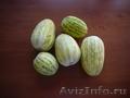 семена огурдыни