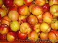 Оптовая продажа фруктов из Греции