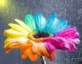 Цветочный салон FREYA