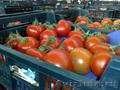 Сбор и упаковка помидоров