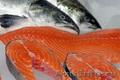 Морская и речная рыба